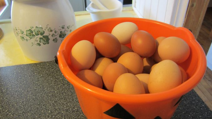 farm fresh brown eggs in Napanee and Kingston