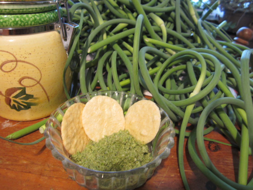 fresh garlic scapes in Napanee and Kingston